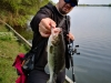 pescuit-bass-2
