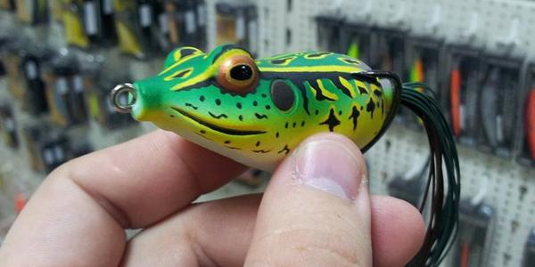 d-frog